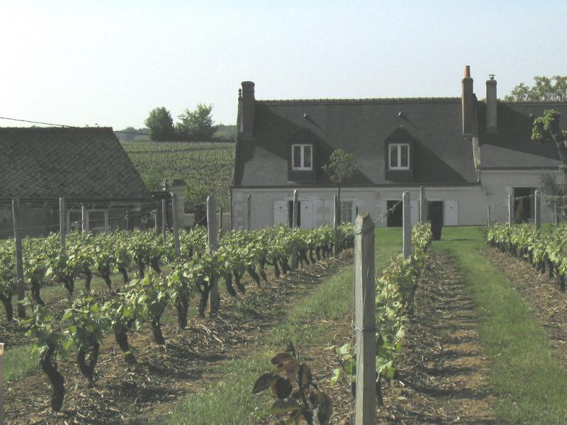 Domaine Champalou - Vouvray - Netvin.com