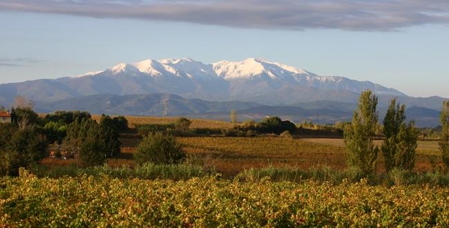 Domaine Sarda Mallet - Côte du Roussillon - Netvin