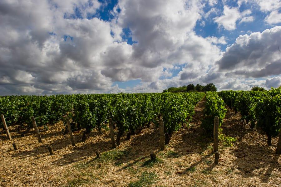 Domaine de Villargeau - Coteaux du Giennois - Netvin.com