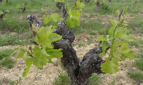 Domaine des Grecaux - coteaux du Languedoc - Netvin