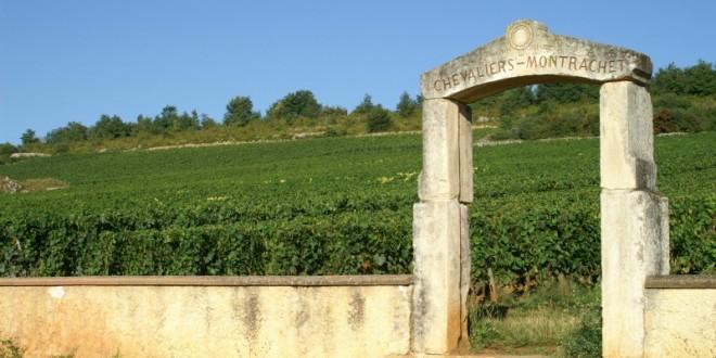 domaine jean chartron - bourgogne - Netvin.com