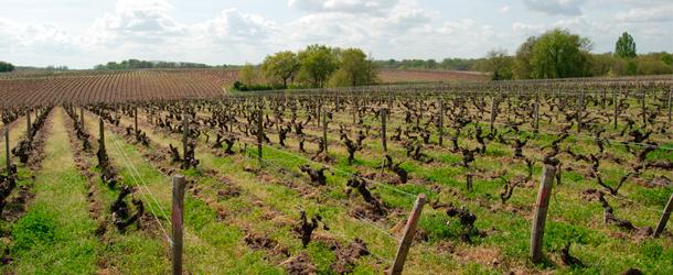 Domaine de la Taille Aux Loups - Montlouis sur Loire, Vouvray - Netvin